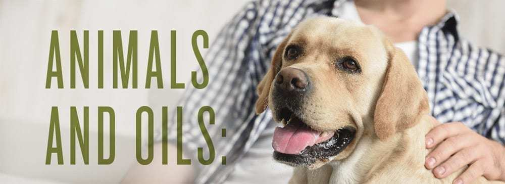 ESSENTIAL OILS SAFE FOR PETS