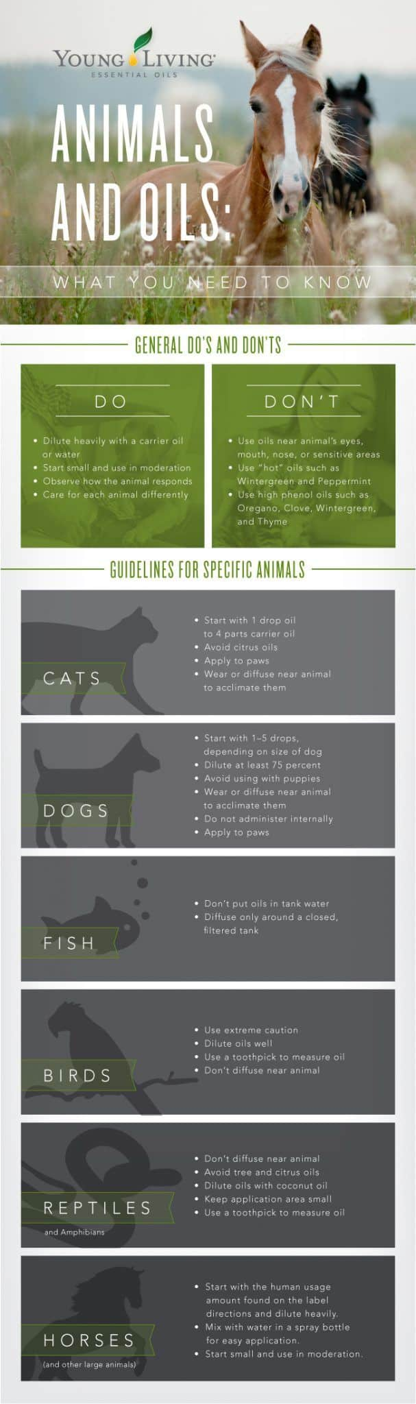 ANIMALS AND ESSENTIAL OILS INFOGRAPHIC