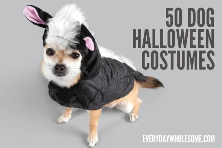 50 Best Halloween Dog Costumes