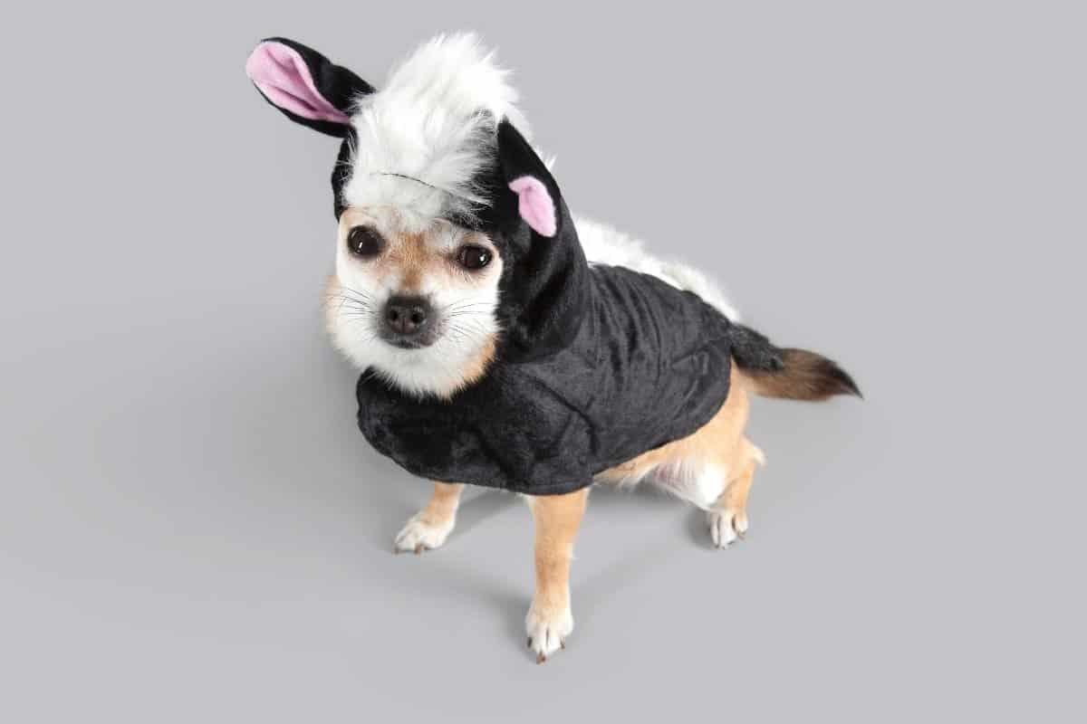Spooktacular Dog neckties for Halloween!
